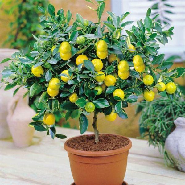 Pflegeleichte zimmerpflanzen 18 vorschl ge pflanz it pflanzen ideen tricks - Zimmerpflanzen sukkulenten ...