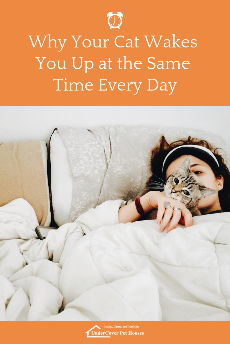 Why Your Cat Wakes You Up at the Same Time Every Day How