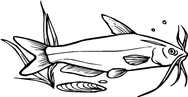 Catfish Coloring Pages Best Place To Color Coloring Pages Catfish Online Coloring