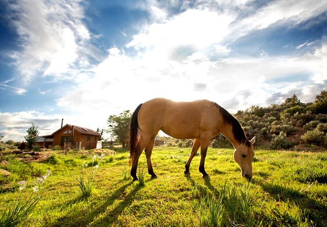 How To Horse-Train Leaders | Fast Company  http://www.fastcompany.com/3001382/how-horse-train-leaders