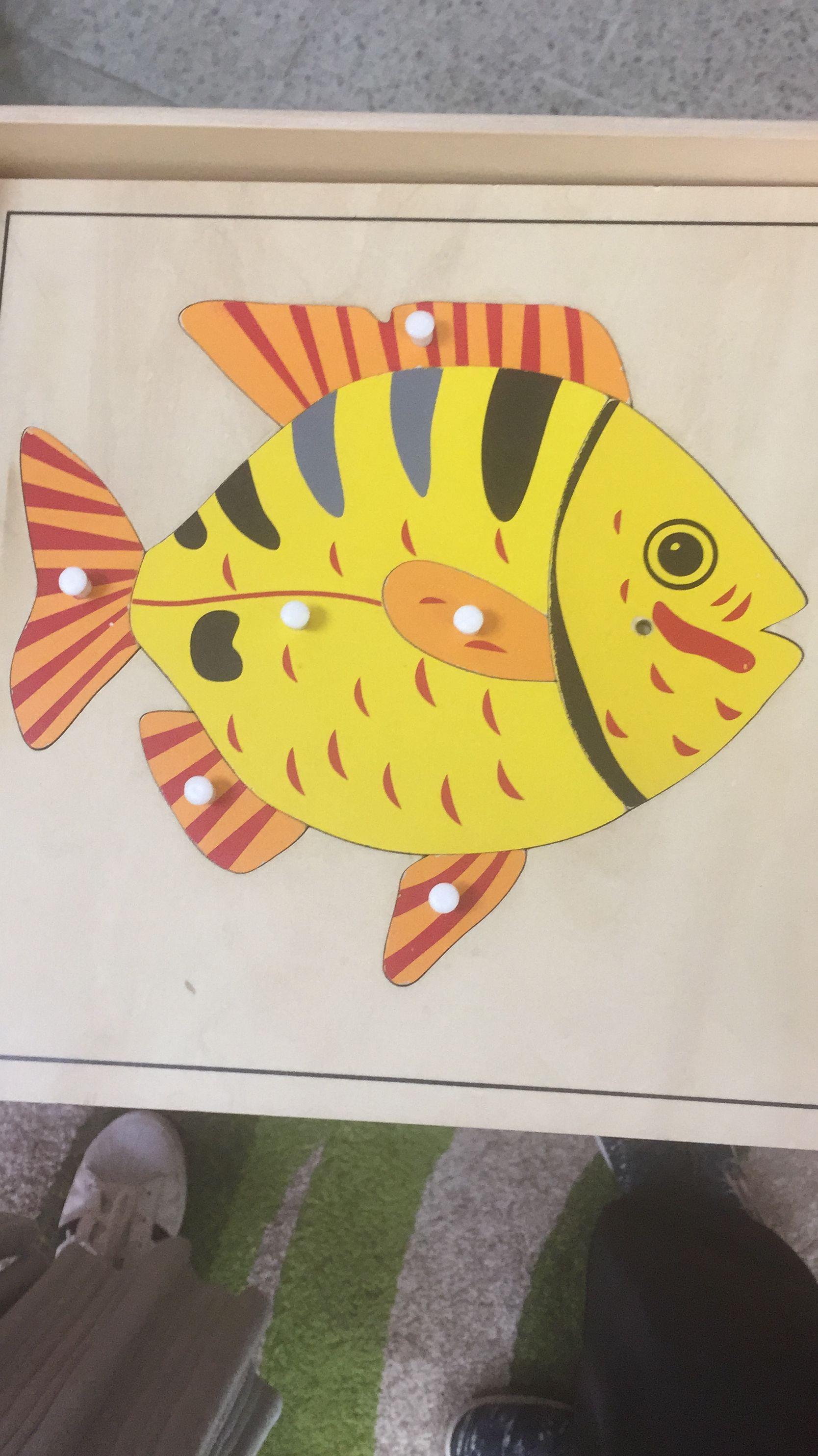 استخدمت في شرح اجزاء السمكه الرئيسيه والفرعيه الرئيسيه الرأس الجسم الذيل الفرعيه الزعانف الظهريه الزعانف الصدريه الزعانف البطنيه Classroom Montessori