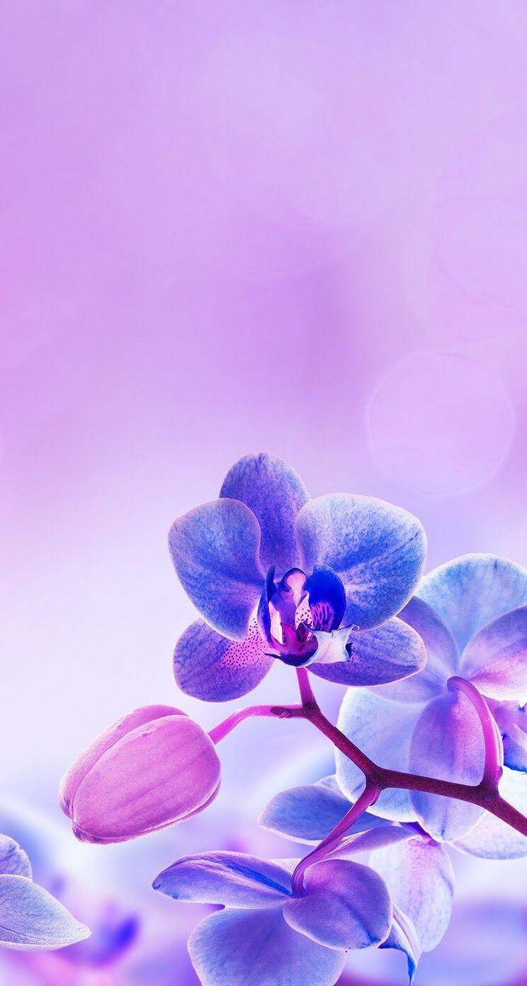 Purple Orchid Iphone Wallpaper Background Lockscreen Orchid Wallpaper Purple Flowers Wallpaper Blue Flower Wallpaper
