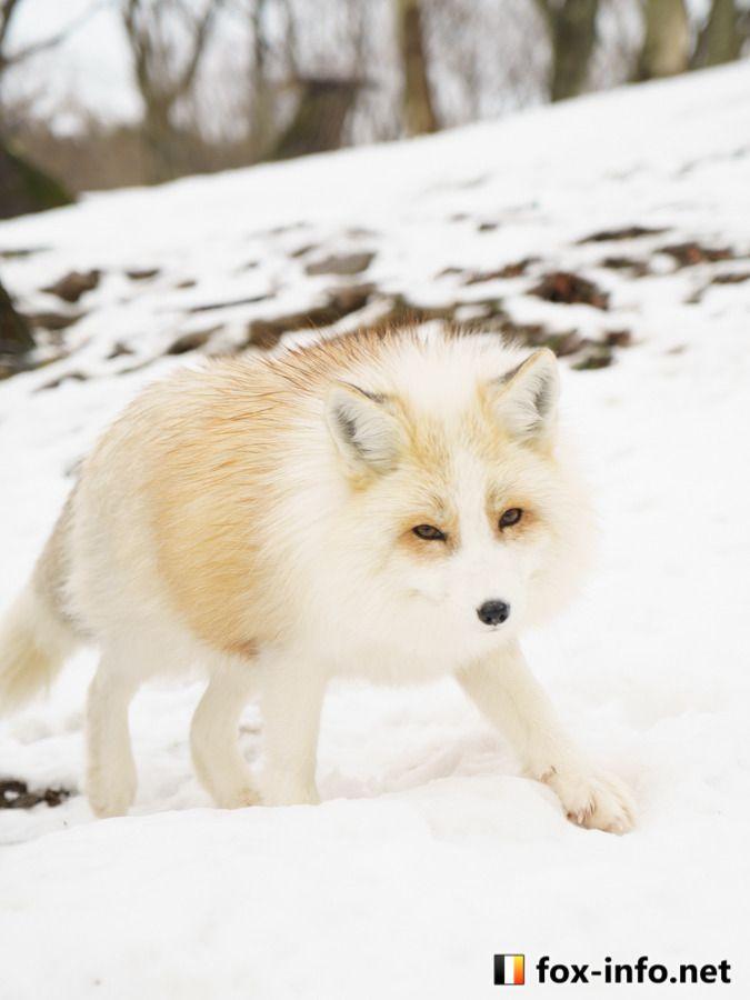 Fox | fox-info net - foxinfonet - fox_info_net | FOXY