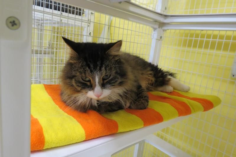 Tuesday S Tails Meet Moe With Images Cat Adoption Animal Shelter
