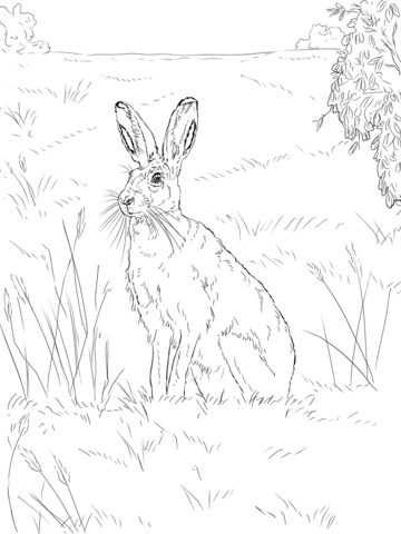 Liebre Europea Dibujo para colorear | animales | Pinterest ...