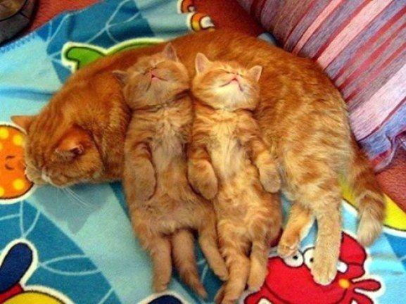 um's make the best pillows