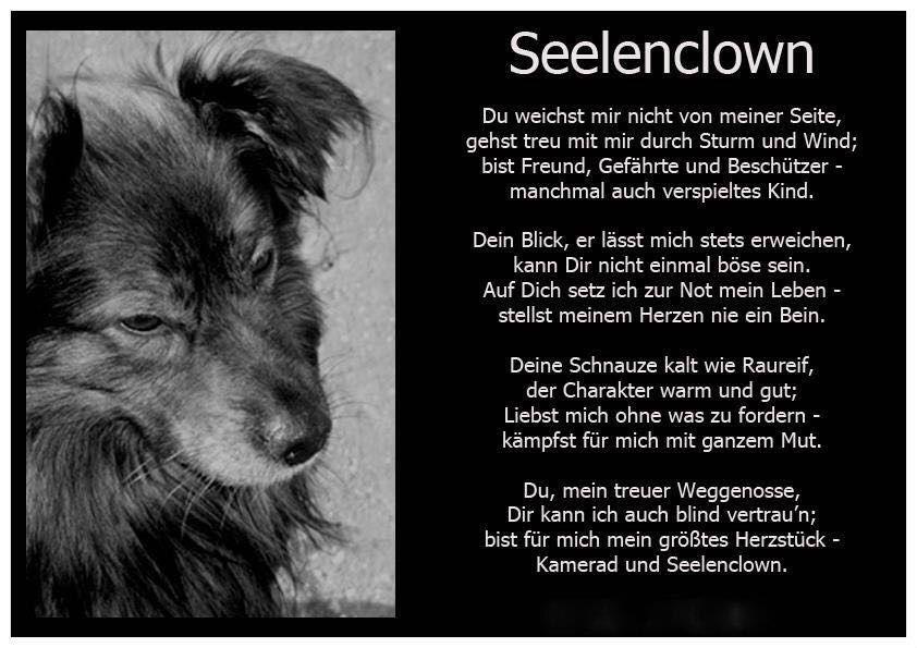 Pin Von Steinbock Auf Hunde Hunde Hundespruche Zitate Tiere