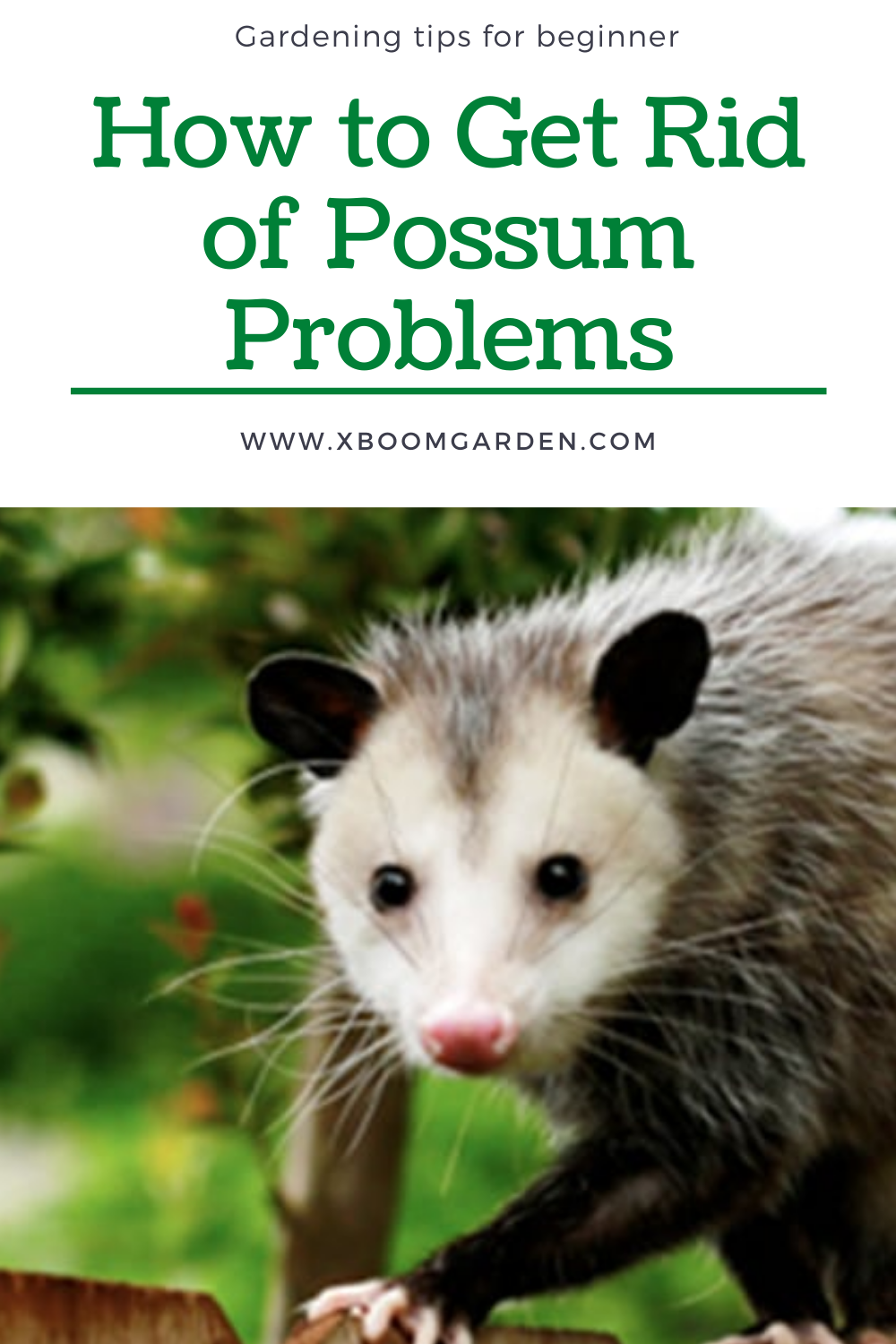 How To Get Rid Of Possums In My Garden