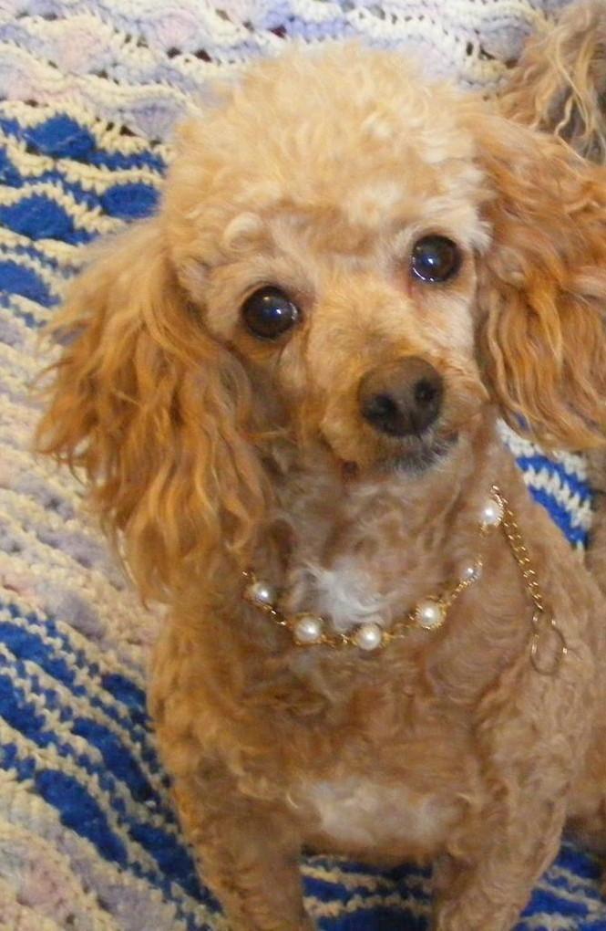 Adopt Sally Ann On Pets Animal Shelter Sally Ann