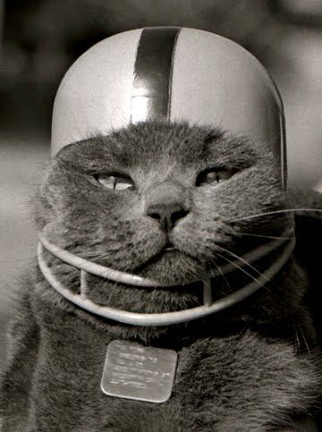 Cute cat with a football helmet on. | Cats, Pet holiday, Pet costumes