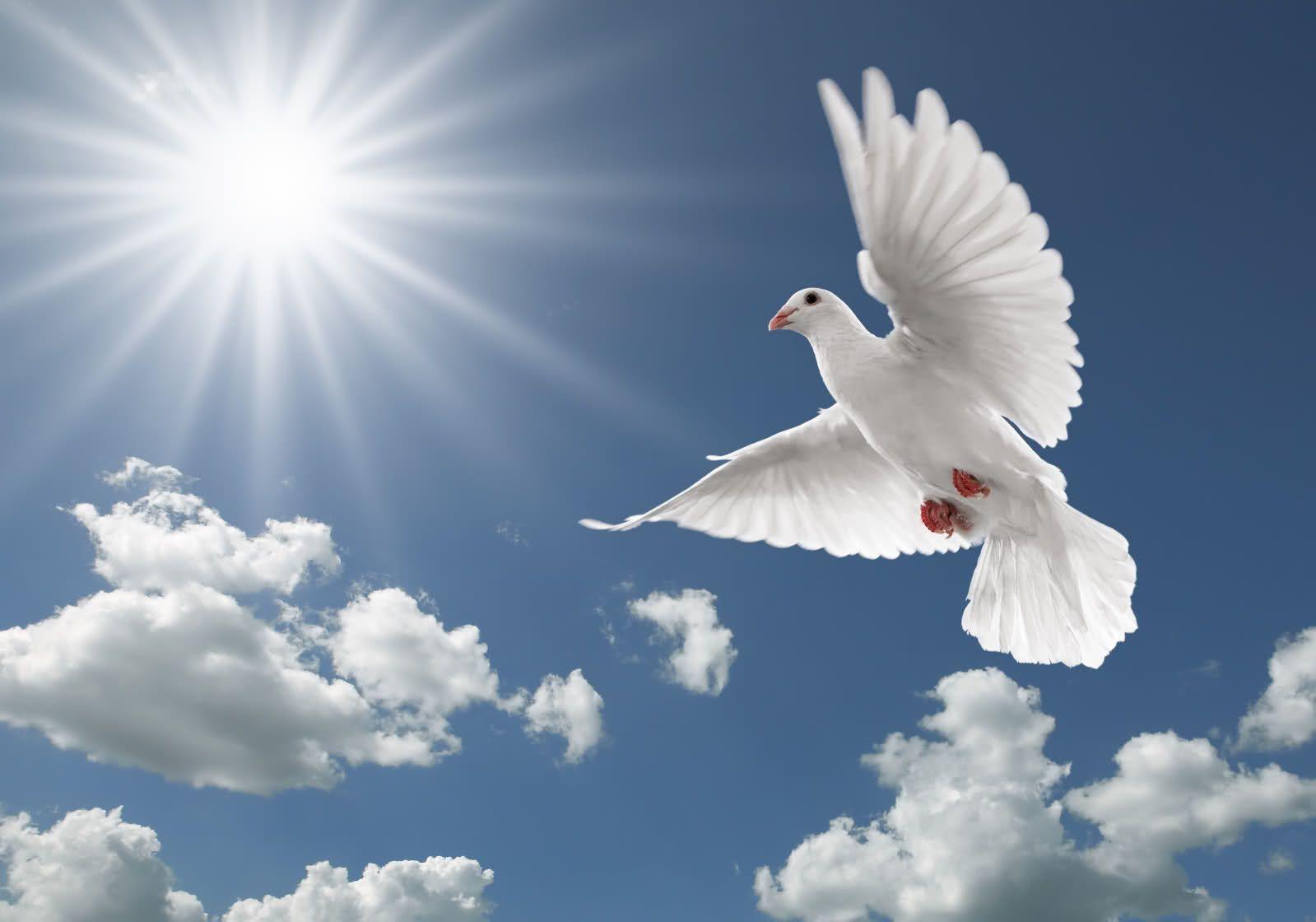 Flying Birds Wallpapers Hd Wallpapers N Bird Wallpaper Dove Flying Birds Flying