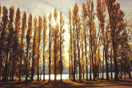 Autumn in Wanaka, New Zealand.