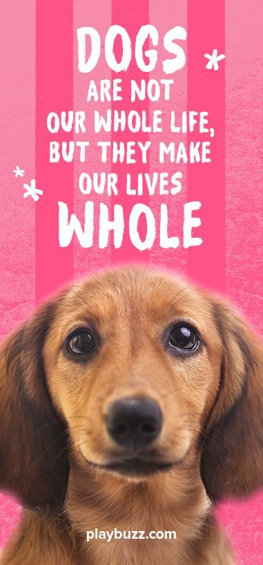 Do You Actually Love Animals More Than You Love People What