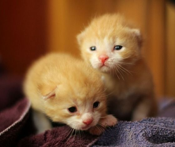 Bit And Bolt The Lucky Ginger Brothers Mama Cat Fur Babies Kittens