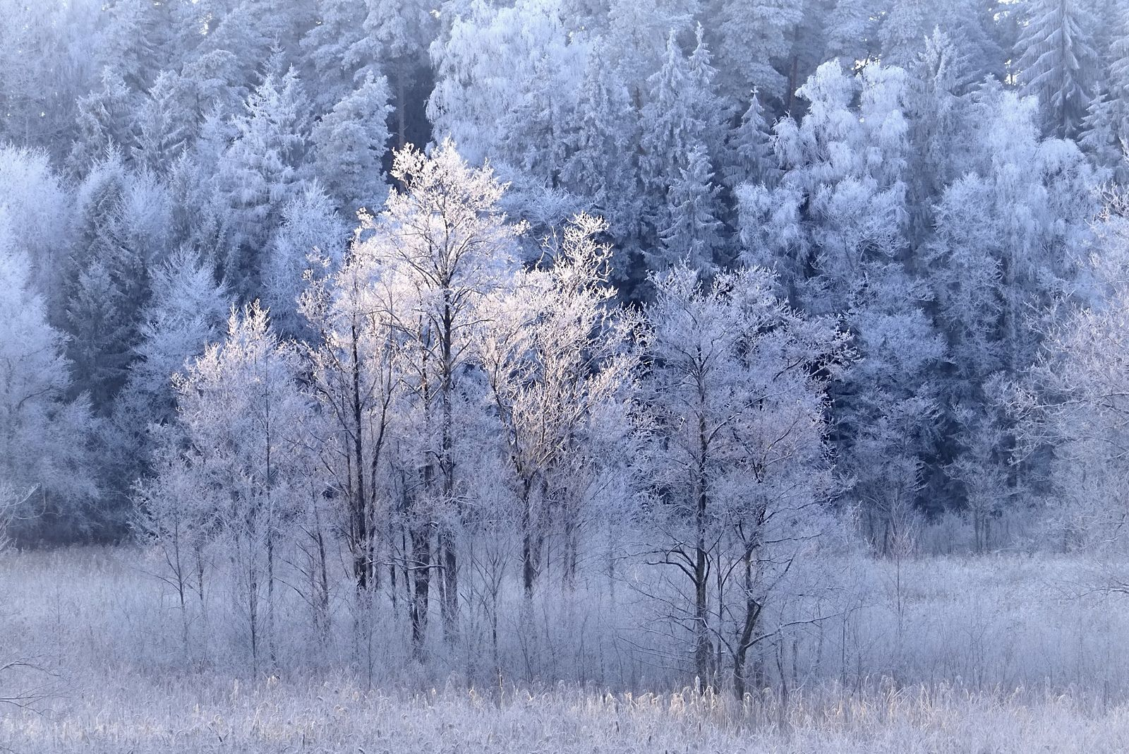 Forest by ** REgiNA ** on 500px (With images) | Frosty kingdom, Photo, Frosty