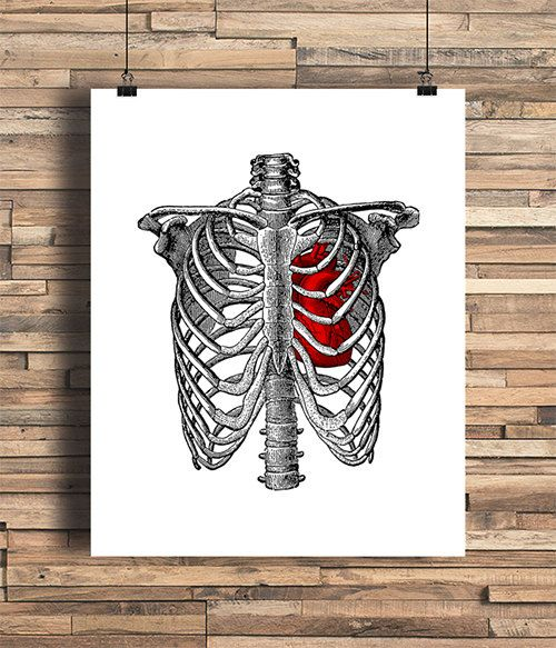 Rib Cage With Anatomical Heart Illustration Bones Human Anatomy Home College Dorm Room Indie Hipster Tattoo Design Giclee Art Print In 2021 Rib Cage Drawing Heart Illustration Anatomical Heart Art