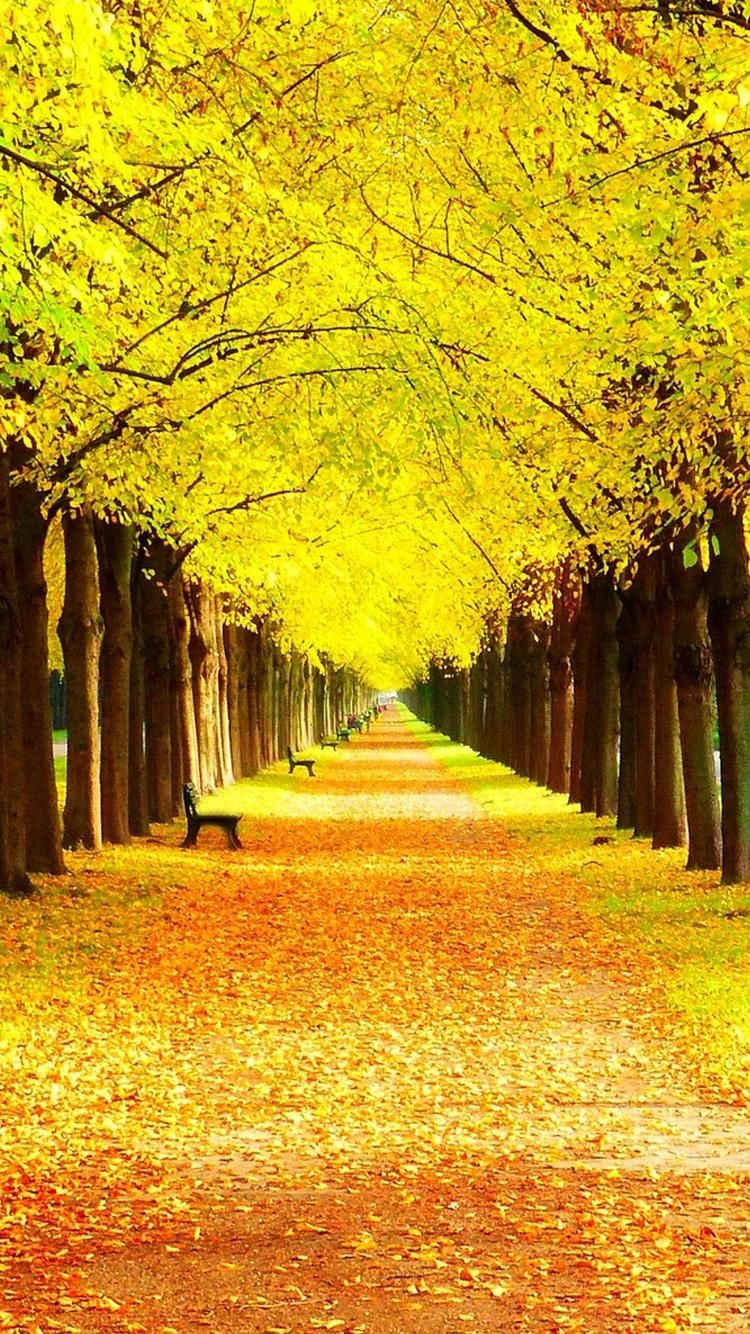 Yellow Wallpaper For Iphone Group 64 Beautiful Nature Scenery Wallpaper Beautiful Nature Wallpaper