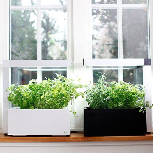 #Herbie 23, Indoor Garden, Blooming Style, #Finnish design, #hydroponic.