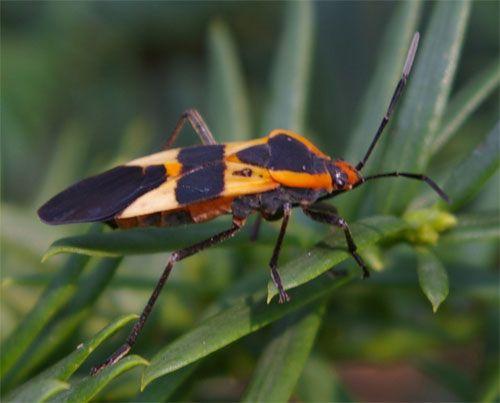 Beetle Animal Orange And Black Beetle Black White Bathrooms