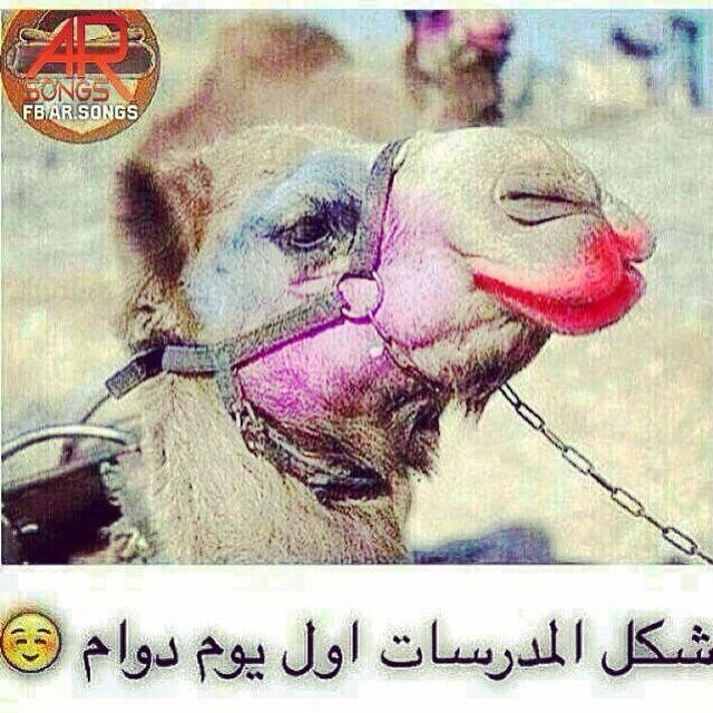 Pin by Norgana Nono on مضحك | Animals, Camel