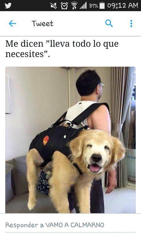 Imagenes Graciosas Para Whatsapp Memes Chistes Chistesmalos Imagenesgraciosas Humor Cute Animals Animals Cute Dogs