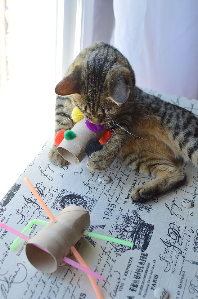 DIY cat toys using empty paper towel and toilet paper rolls.