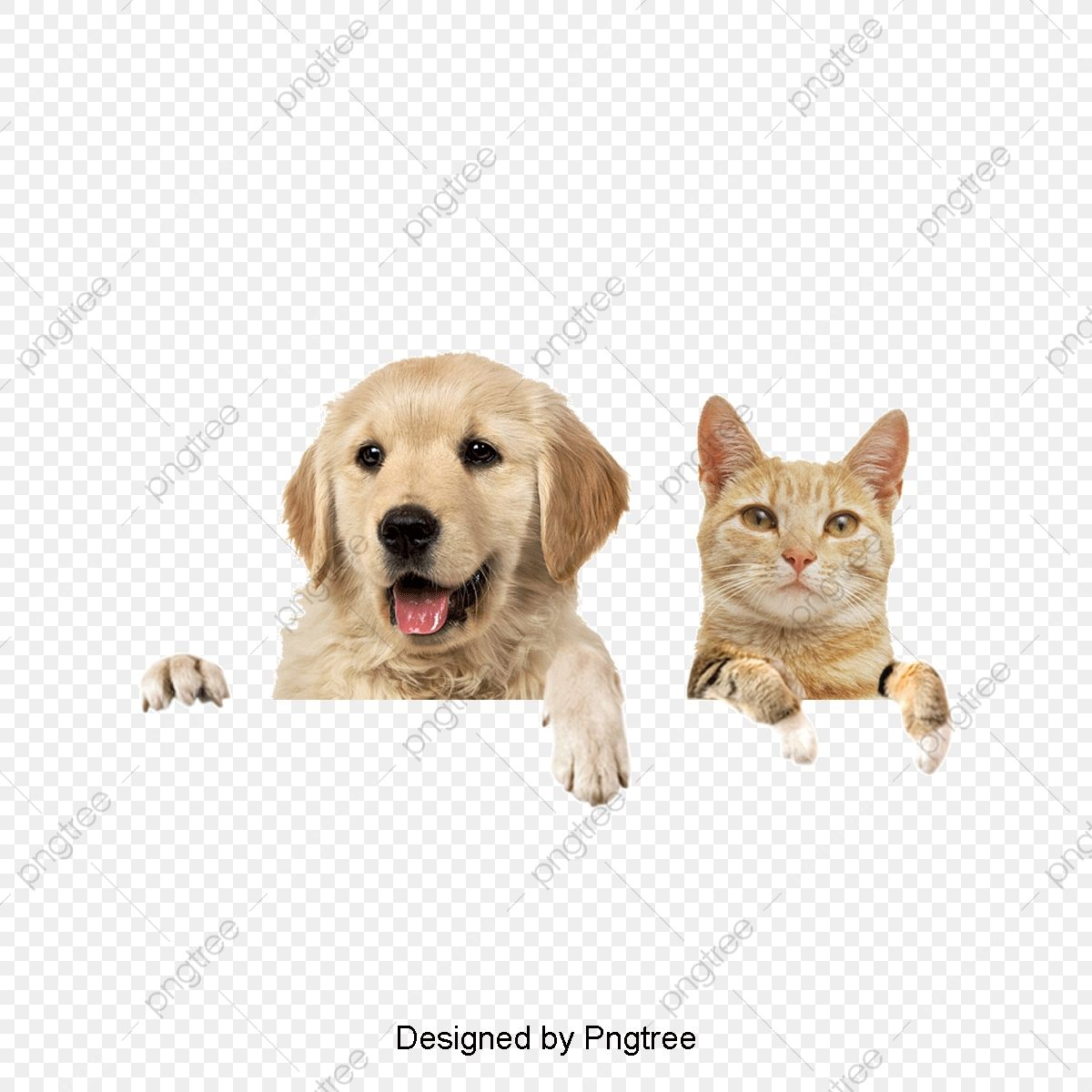 Dogs And Cats Dogs Dog Cat Puppy Png Transparent Image And Clipart For Free Download In 2021 Cute Cats And Dogs Cat Background Dog Cat