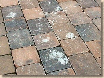 Cement Stained Block Paving Brick Flooring Cement Stain