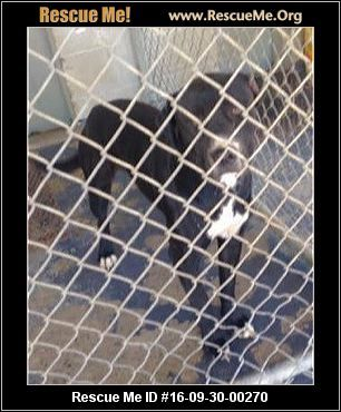 UPDATE: 11/18/2016 This dog is still listed as being available for adoption. ― Tennessee Dog Rescue ― ADOPTIONS ― RescueMe.Org