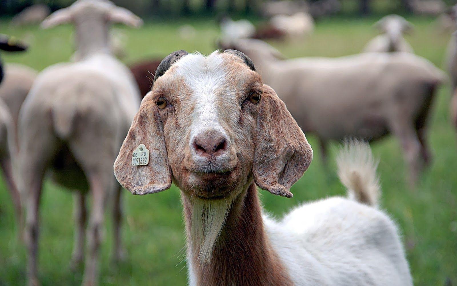 صور حيوانات نتائج بحث صور ياهو Animals Image Image Search