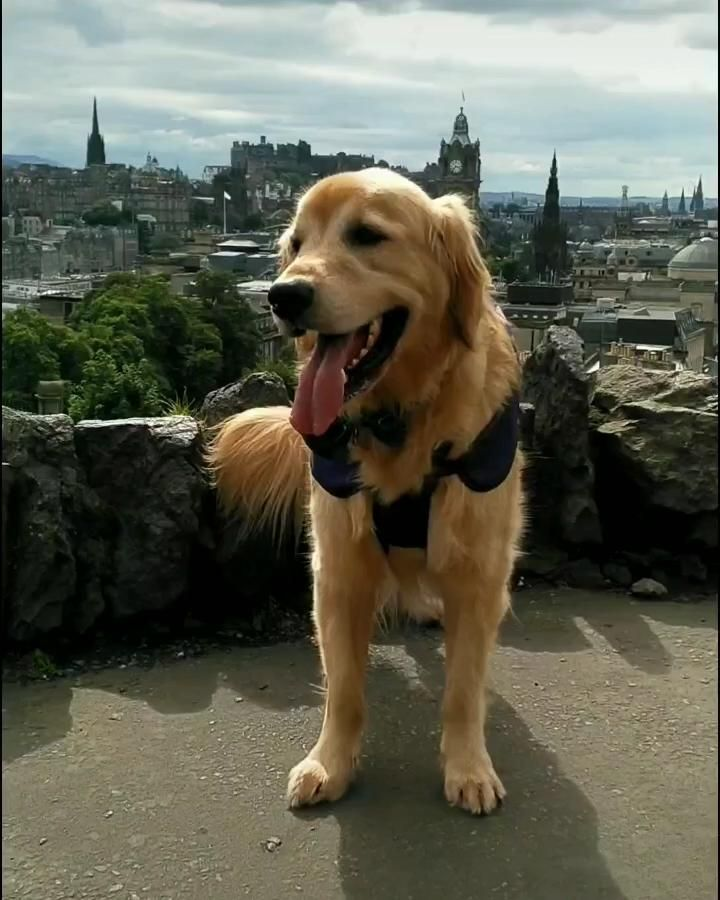 Welcome to Edinburgh, Scotland!❤️🏴 #WeeWalkingTours #SawyerTheGoldenGuide #CaltonHill #Edinburgh #Scotland #ScotSpirit #VisitScotland #LetsGoExplore #ThisIsEdinburgh #LoveScotland