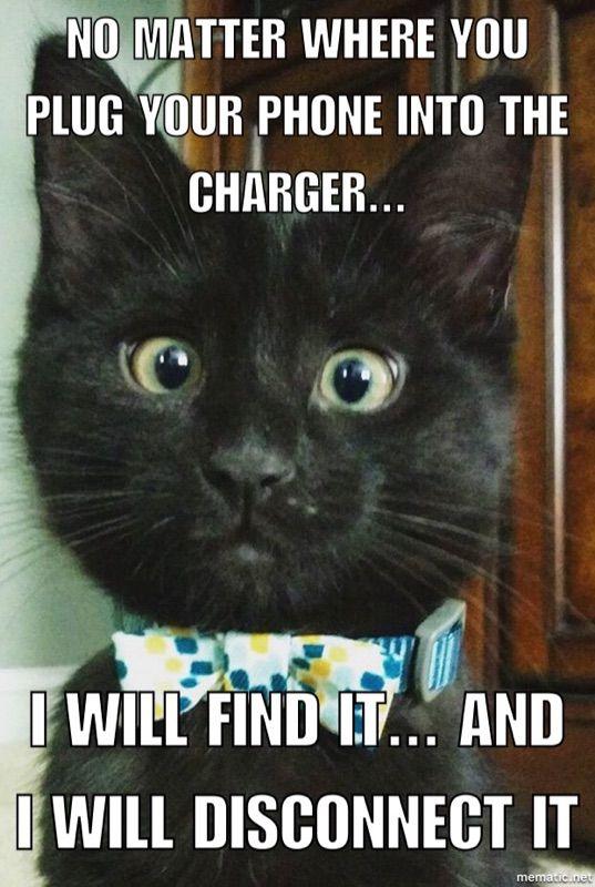 My New Kitten Sassy Animals Funny Animal Memes Kittens Cutest
