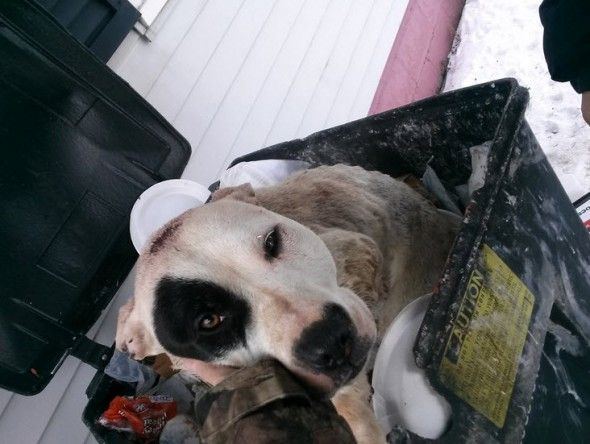 Precious The Bait And Trash Can Dog Gets New Life Animals Dogs Pets