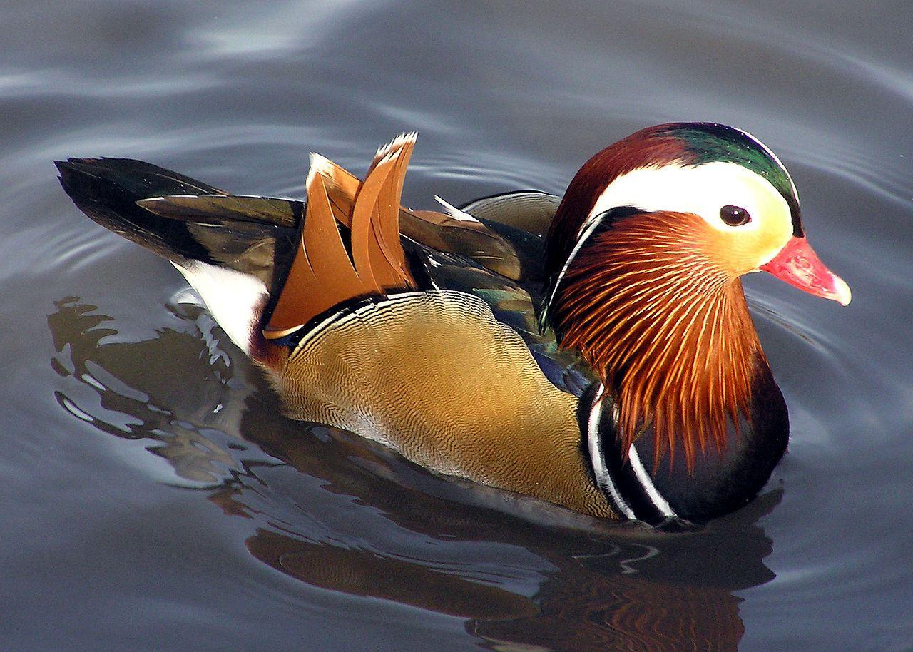 Pin De Jesusita Ac En Sea Birds