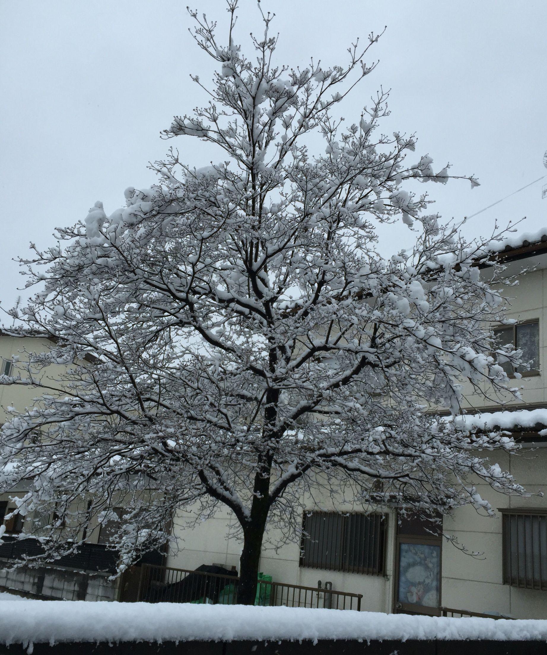 Honjo-japao