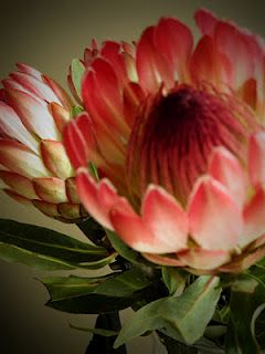 Absolutely Love Protea Flowers Idees Jardin Fleurs Jardins