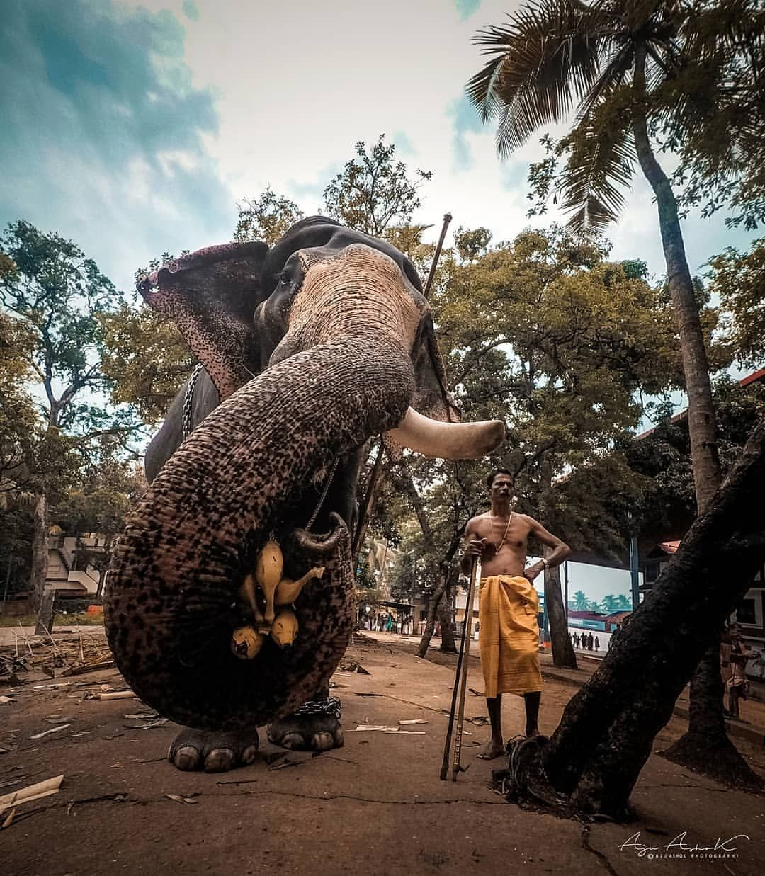 A Frame From Guruvayoor Temple Pic Credit Elephant