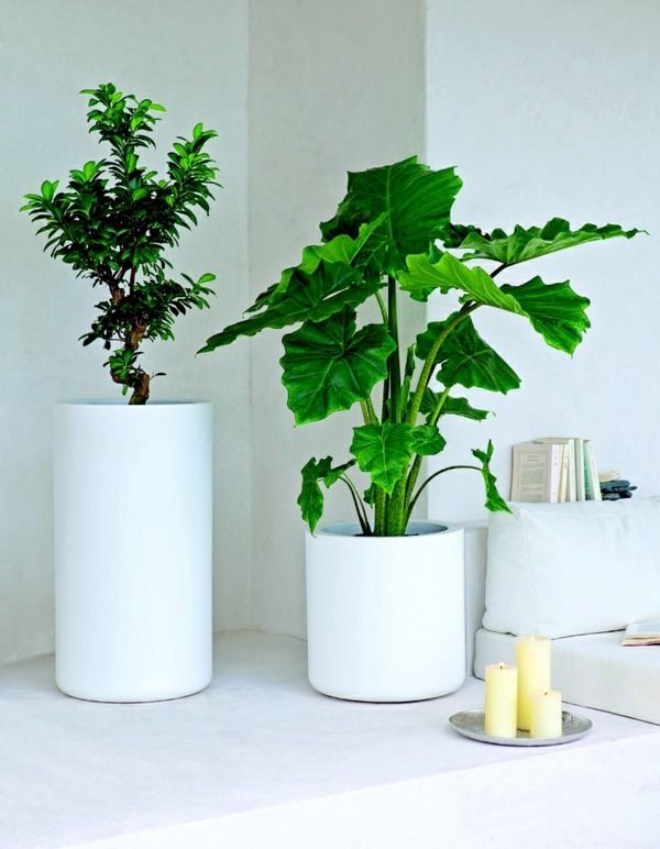 Feng shui plants for harmony and positive energy in the for Plante feng shui