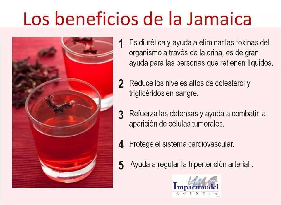 Los Beneficios De La Jamaica Con Imagenes Beneficios De La