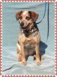 Adopt Rosie On Dog Friends Calm Dog Breeds Beagle Dog
