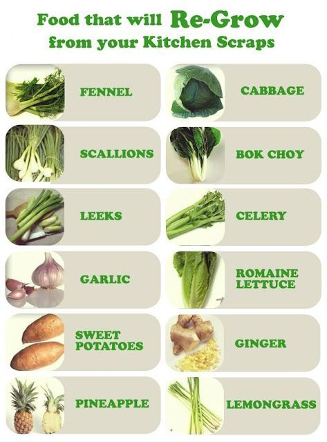 Grow plants from kitchen scraps. Good for starter vegetable garden.
