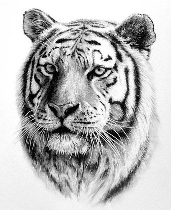 zeichnung in schwarz und wei tigerkopf vorlage trends pinterest tiger tattoo tattoo. Black Bedroom Furniture Sets. Home Design Ideas