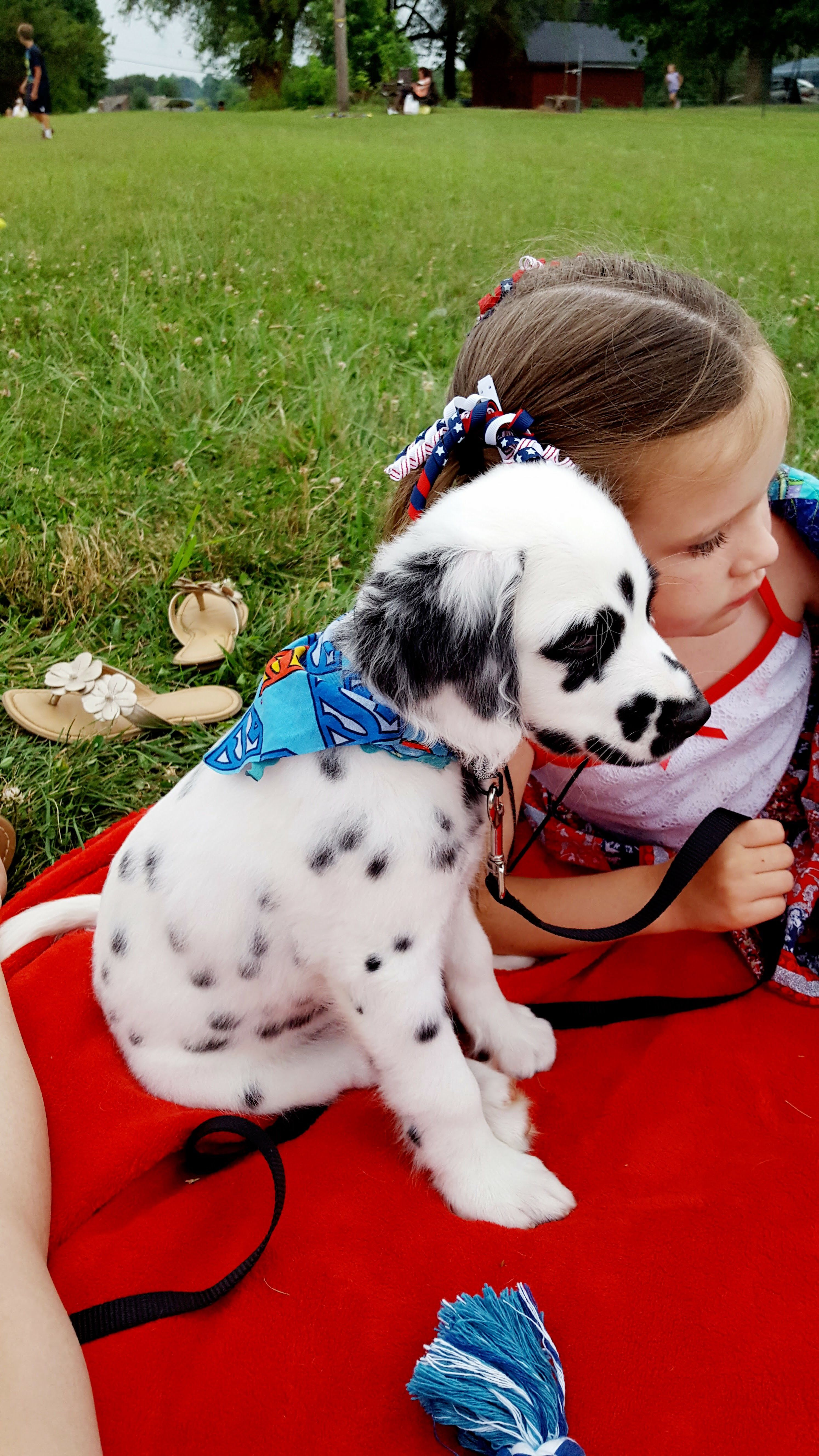 Long Haired Dalmatian Dalmation Puppy Cute Dog Pictures Dalmatian Puppy