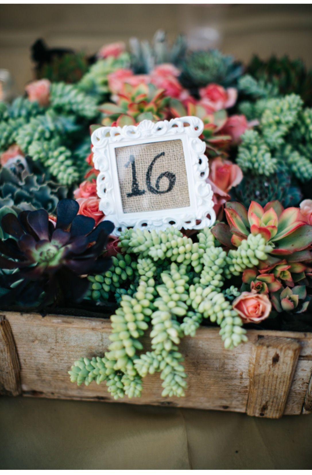Succulents Wedding, Country wedding, Wedding renewal vows