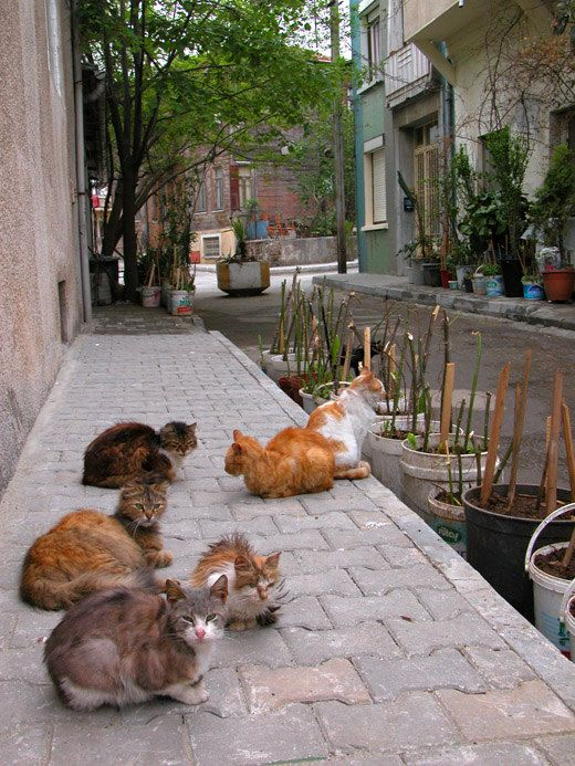 b3d46d4008 Street Cats Travel photography IstanbulPrinces by MorrisClassics