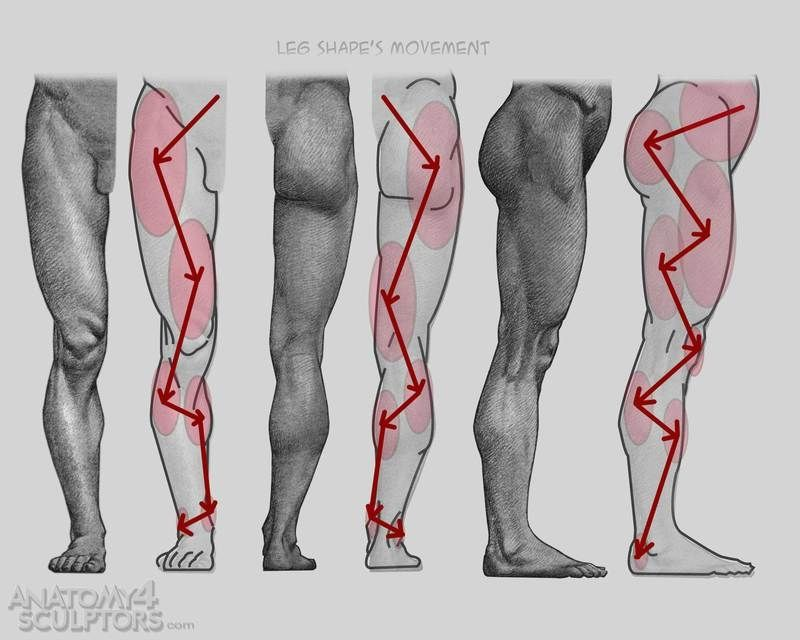 45 best anatomy for art - arms & legs images on pinterest, Human Body