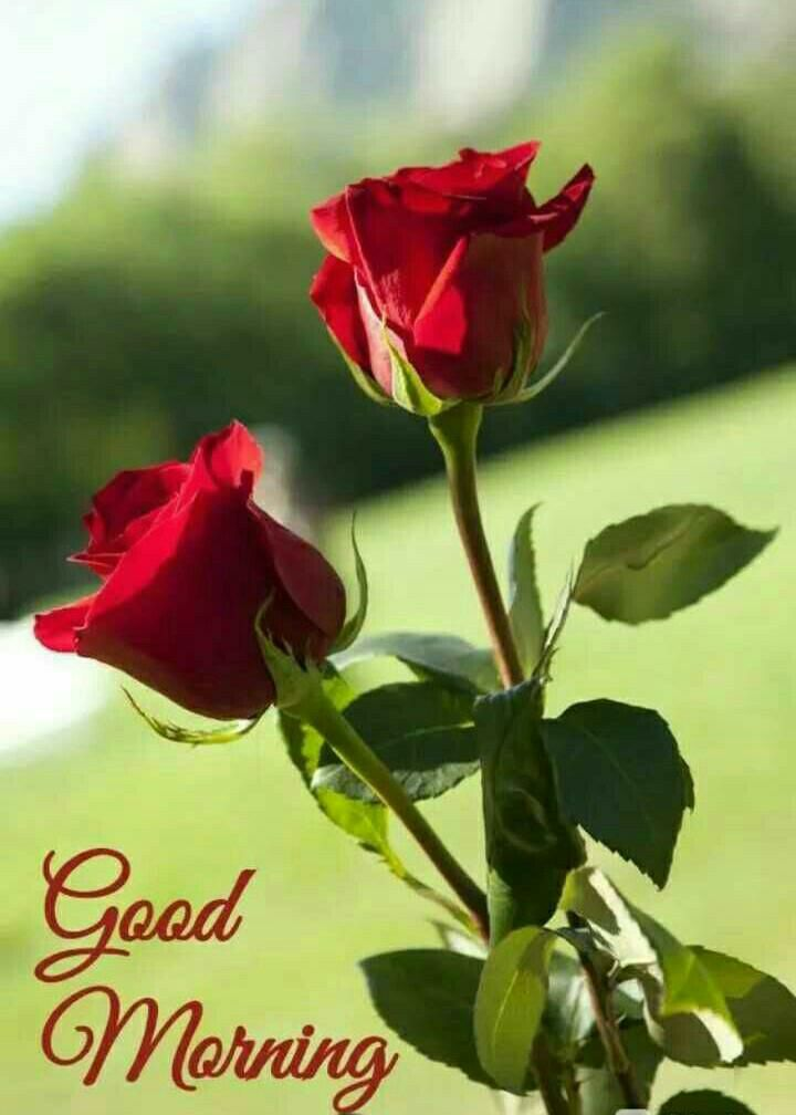 Good Morning Images Download Hd Good Morning Flowers Good Morning Flowers Rose Good Morning Images Flowers