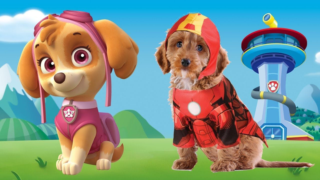 paw patrol superheroes animals in real life finger family song paw