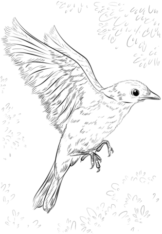 Blue Bird Flying Coloring Page Bird Drawings Drawing Pictures