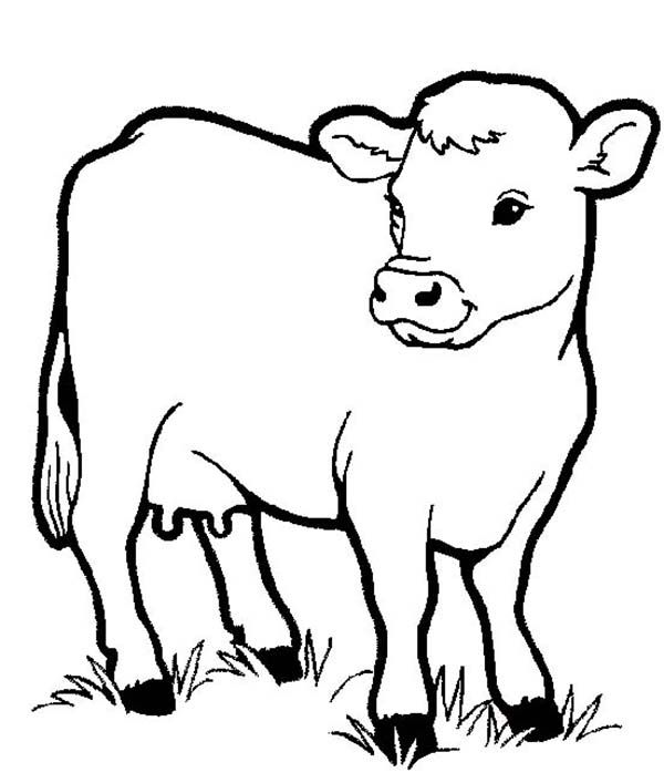 healthy milch cow in farm animal coloring page - Colouring For Kids